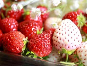 赤いいちごと白いいちご