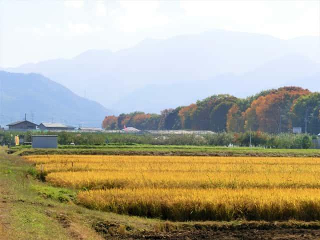 山形の田んぼの風景