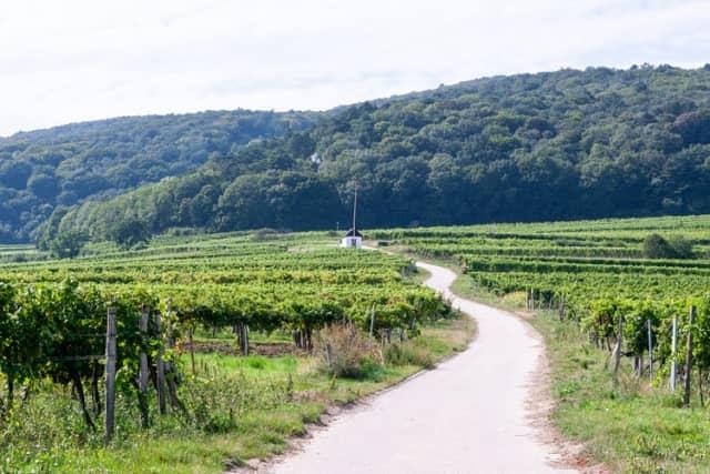 ワイン産地